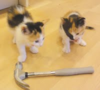 Hammer and Kittens
